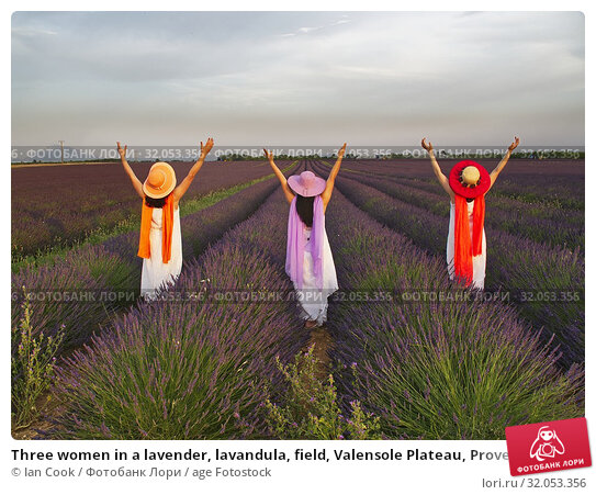 Three women in a lavender, lavandula, field, Valensole Plateau, Provence, France. (2019 год). Редакционное фото, фотограф Ian Cook / age Fotostock / Фотобанк Лори