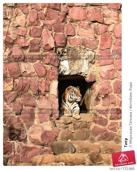 Тигр, фото № 172060, снято 31 марта 2007 г. (c) Морозова Татьяна / Фотобанк Лори