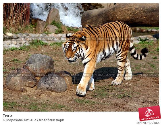 Тигр, фото № 172064, снято 31 марта 2007 г. (c) Морозова Татьяна / Фотобанк Лори