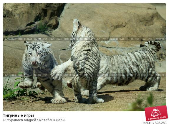 Тигриные игры, эксклюзивное фото № 328280, снято 18 июня 2008 г. (c) Журавлев Андрей / Фотобанк Лори