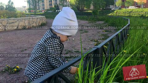 Toddler child wearing shirt and hat touching green grass while walking on pathway in urban park, one year old kid. Стоковое видео, видеограф Кекяляйнен Андрей / Фотобанк Лори