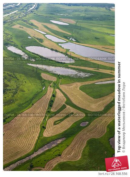 Купить «Top view of a waterlogged meadow in summer», фото № 28168556, снято 2 августа 2017 г. (c) Владимир Мельников / Фотобанк Лори