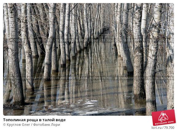 Тополиная роща в талой воде, фото № 79700, снято 10 апреля 2007 г. (c) Круглов Олег / Фотобанк Лори