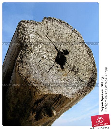 Купить «Торец бревна. Old log», фото № 134776, снято 2 октября 2005 г. (c) Serg Zastavkin / Фотобанк Лори