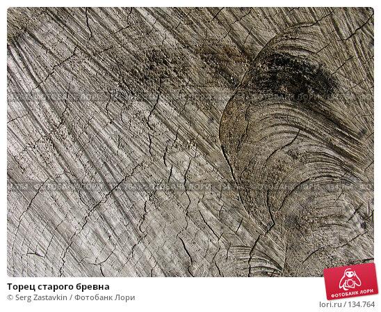 Торец старого бревна, фото № 134764, снято 2 октября 2005 г. (c) Serg Zastavkin / Фотобанк Лори