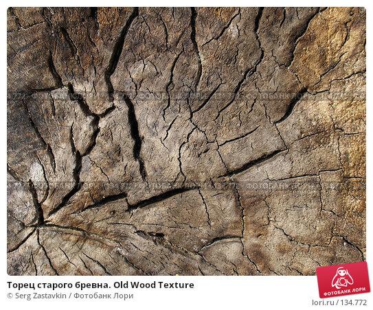 Купить «Торец старого бревна. Old Wood Texture», фото № 134772, снято 2 октября 2005 г. (c) Serg Zastavkin / Фотобанк Лори
