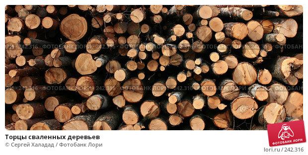 Торцы сваленных деревьев, фото № 242316, снято 3 апреля 2008 г. (c) Сергей Халадад / Фотобанк Лори