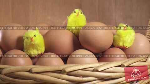 Купить «toy chickens sit between eggs», видеоролик № 26665392, снято 17 июля 2009 г. (c) Куликов Константин / Фотобанк Лори
