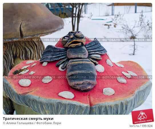 Трагическая смерть мухи, эксклюзивное фото № 199924, снято 11 февраля 2008 г. (c) Алина Голышева / Фотобанк Лори