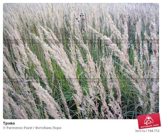 Трава, фото № 144112, снято 19 сентября 2004 г. (c) Parmenov Pavel / Фотобанк Лори