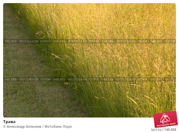 Трава, эксклюзивное фото № 148888, снято 16 июня 2007 г. (c) Александр Алексеев / Фотобанк Лори