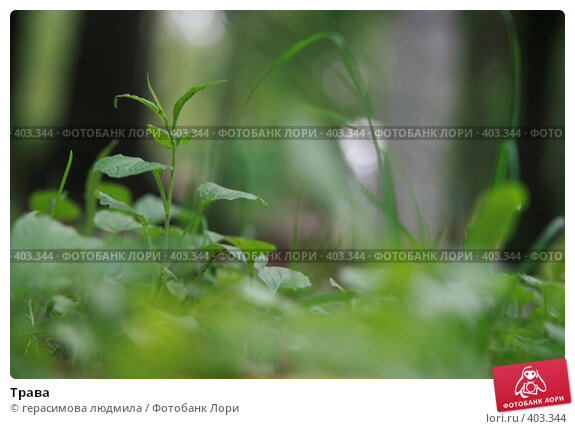 Купить «Трава», фото № 403344, снято 1 августа 2008 г. (c) герасимова людмила / Фотобанк Лори