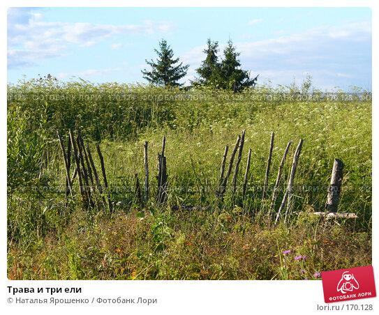 Трава и три ели, фото № 170128, снято 22 июля 2007 г. (c) Наталья Ярошенко / Фотобанк Лори