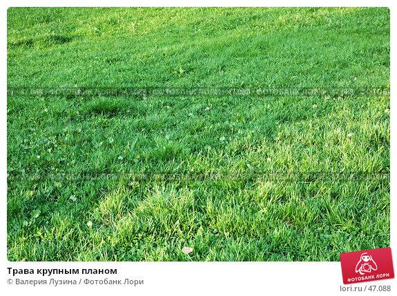 Трава крупным планом, фото № 47088, снято 20 мая 2007 г. (c) Валерия Потапова / Фотобанк Лори