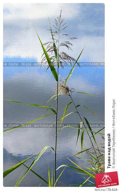 Трава над водой, фото № 78624, снято 2 сентября 2007 г. (c) Анатолий Теребенин / Фотобанк Лори