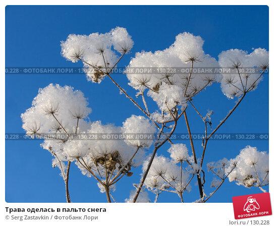 Трава оделась в пальто снега, фото № 130228, снято 18 декабря 2005 г. (c) Serg Zastavkin / Фотобанк Лори