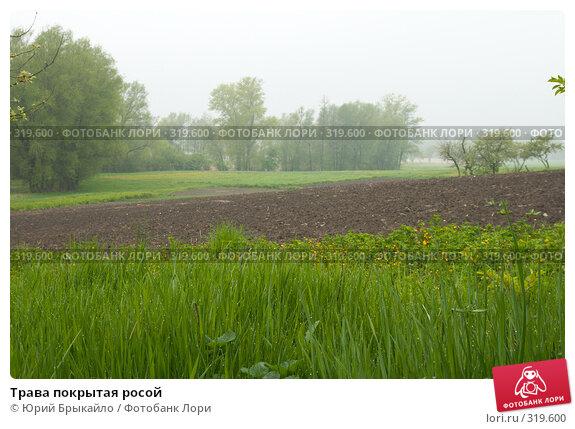 Трава покрытая росой, фото № 319600, снято 3 мая 2008 г. (c) Юрий Брыкайло / Фотобанк Лори