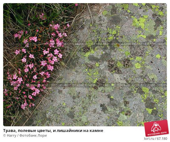 Трава, полевые цветы, и лишайники на камне, фото № 67180, снято 26 июня 2004 г. (c) Harry / Фотобанк Лори