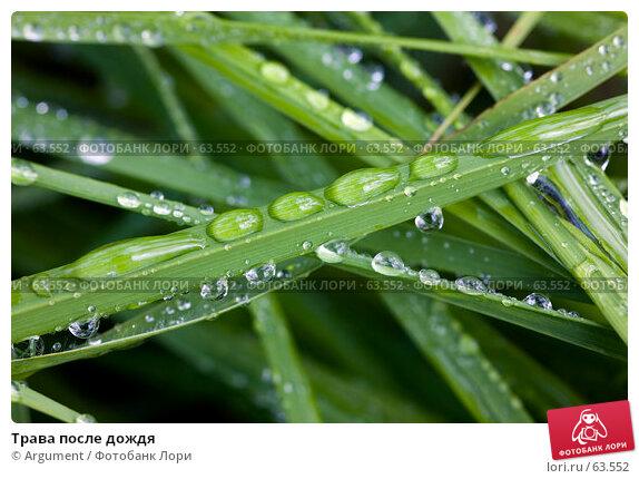 Трава после дождя, фото № 63552, снято 6 июля 2007 г. (c) Argument / Фотобанк Лори