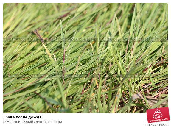 Купить «Трава после дождя», фото № 116540, снято 18 августа 2007 г. (c) Марюнин Юрий / Фотобанк Лори