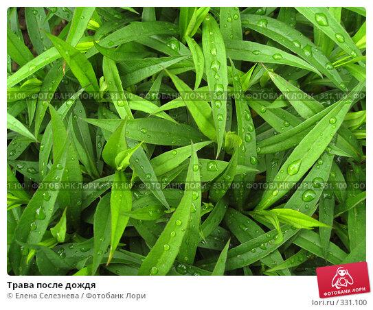 Трава после дождя, фото № 331100, снято 22 июня 2008 г. (c) Елена Селезнева / Фотобанк Лори