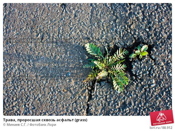 Купить «Трава, проросшая сквозь асфальт (grass)», фото № 88912, снято 22 сентября 2007 г. (c) Минаев С.Г. / Фотобанк Лори