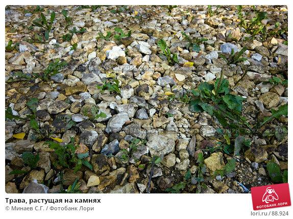 Трава, растущая на камнях, фото № 88924, снято 22 сентября 2007 г. (c) Минаев С.Г. / Фотобанк Лори