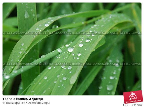 Трава с каплями дождя, фото № 91996, снято 1 сентября 2007 г. (c) Елена Бринюк / Фотобанк Лори