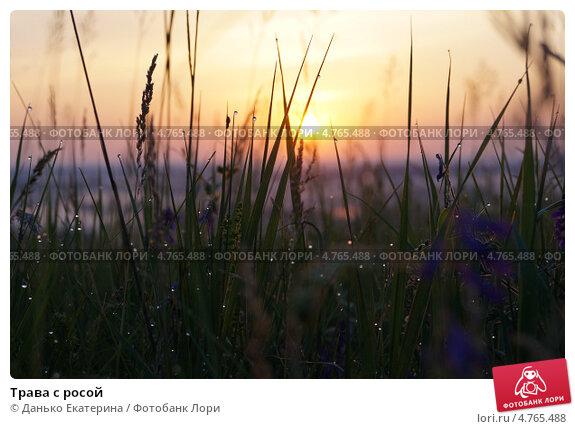 Трава с росой. Стоковое фото, фотограф Данько Екатерина / Фотобанк Лори