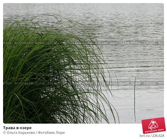 Трава в озере, фото № 236624, снято 11 июня 2007 г. (c) Ольга Хорькова / Фотобанк Лори
