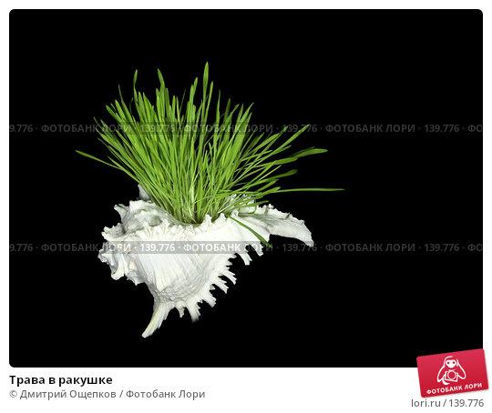 Трава в ракушке, фото № 139776, снято 13 января 2007 г. (c) Дмитрий Ощепков / Фотобанк Лори