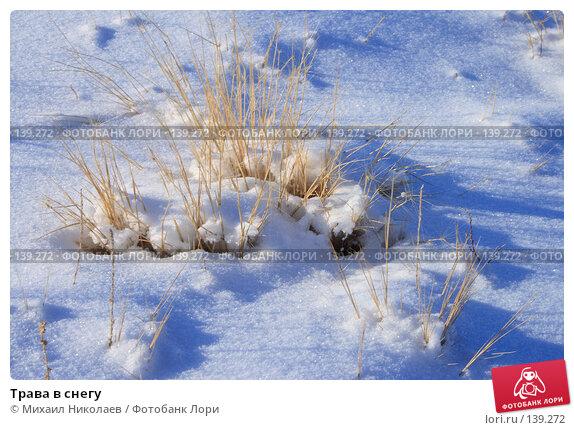 Трава в снегу, фото № 139272, снято 2 декабря 2007 г. (c) Михаил Николаев / Фотобанк Лори