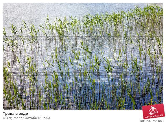 Трава в воде, фото № 753080, снято 23 июня 2007 г. (c) Argument / Фотобанк Лори