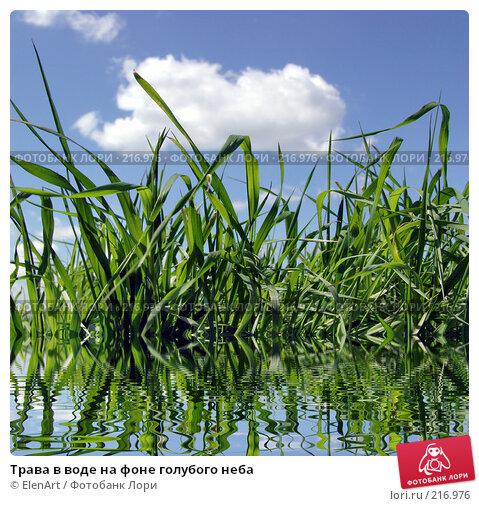 Купить «Трава в воде на фоне голубого неба», фото № 216976, снято 21 апреля 2018 г. (c) ElenArt / Фотобанк Лори