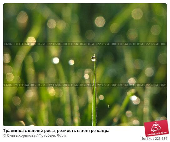 Травинка с каплей росы, резкость в центре кадра, фото № 223684, снято 19 января 2017 г. (c) Ольга Хорькова / Фотобанк Лори