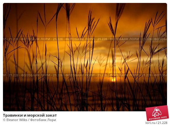Травинки и морской закат, фото № 21228, снято 10 марта 2007 г. (c) Eleanor Wilks / Фотобанк Лори