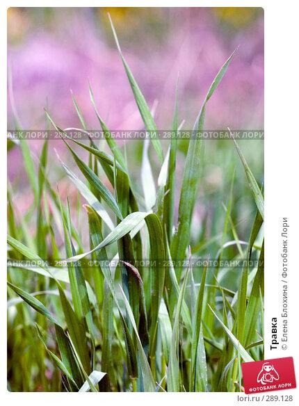 Травка, фото № 289128, снято 16 мая 2008 г. (c) Елена Блохина / Фотобанк Лори