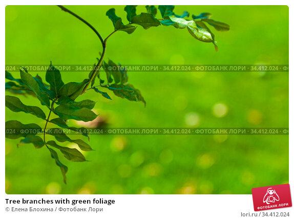 Tree branches with green foliage. Стоковое фото, фотограф Елена Блохина / Фотобанк Лори