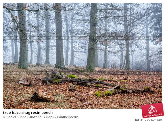 Купить «tree haze snag resin beech», фото № 27623604, снято 19 июня 2019 г. (c) PantherMedia / Фотобанк Лори