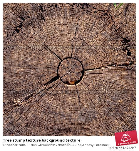 Tree stump texture background texture. Стоковое фото, фотограф Zoonar.com/Ruslan Gilmanshin / easy Fotostock / Фотобанк Лори