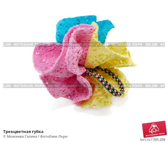 Трехцветная губка, фото № 305208, снято 20 января 2008 г. (c) Моисеева Галина / Фотобанк Лори