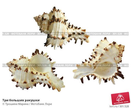 Три больших ракушки, фото № 301528, снято 28 октября 2016 г. (c) Трошина Марина / Фотобанк Лори