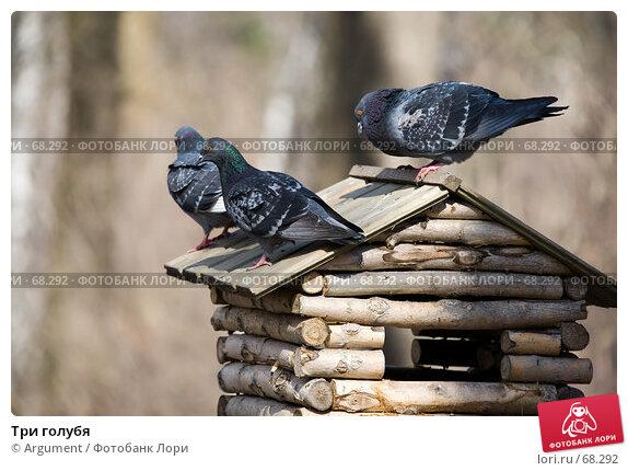 Купить «Три голубя», фото № 68292, снято 12 апреля 2007 г. (c) Argument / Фотобанк Лори