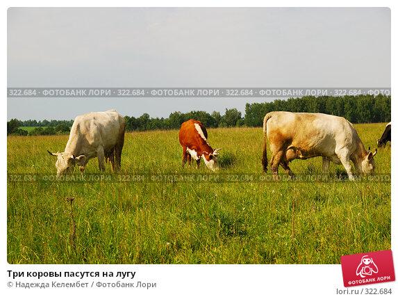 Купить «Три коровы пасутся на лугу», фото № 322684, снято 12 июня 2008 г. (c) Надежда Келембет / Фотобанк Лори