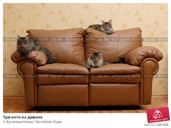 Три кота на диване, фото № 209904, снято 26 февраля 2008 г. (c) Бутинова Елена / Фотобанк Лори