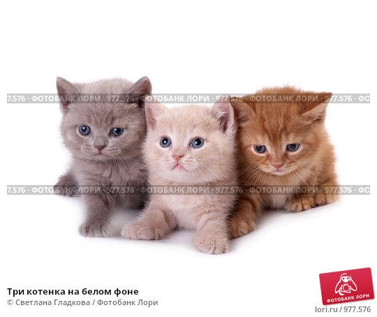 Купить «Три котенка на белом фоне», фото № 977576, снято 25 июня 2009 г. (c) Cветлана Гладкова / Фотобанк Лори
