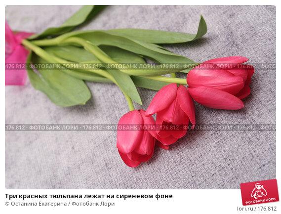 Три красных тюльпана лежат на сиреневом фоне, фото № 176812, снято 15 января 2008 г. (c) Останина Екатерина / Фотобанк Лори