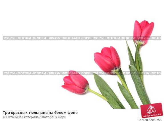 Три красных тюльпана на белом фоне, фото № 208756, снято 15 января 2008 г. (c) Останина Екатерина / Фотобанк Лори