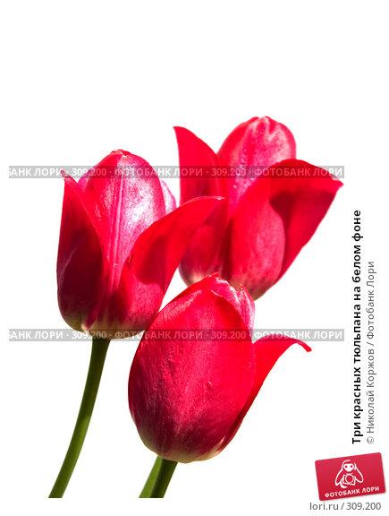 Три красных тюльпана на белом фоне, фото № 309200, снято 31 мая 2008 г. (c) Николай Коржов / Фотобанк Лори