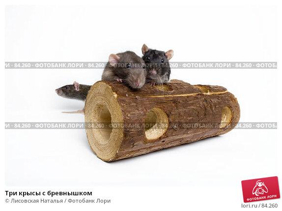Купить «Три крысы с бревнышком», фото № 84260, снято 15 сентября 2007 г. (c) Лисовская Наталья / Фотобанк Лори